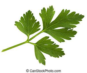 Petersilie grünes Blatt