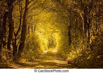 Pfad in goldenem Wald.