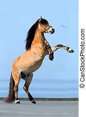 Pferd aufgezogen auf blauem Hintergrund.