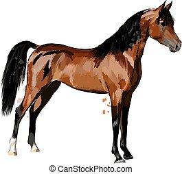 pferd, hand, skizze, spritzen, gezeichnet, watercolors.