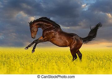 Pferd in Blumen.