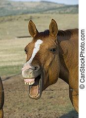 pferd, lachender
