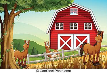Pferde auf der Farm bei der roten Scheune.
