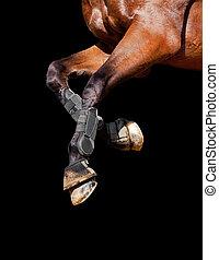 Pferdebeine isoliert auf schwarz.