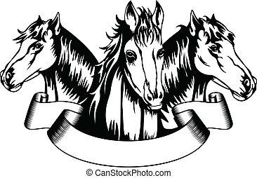 pferden, köpfe