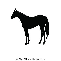 Pferdesilhouette.