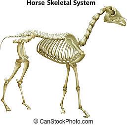 Pferdeskelettsystem.