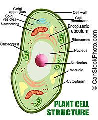 Pflanzenzellenstruktur.