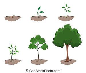Phase des Wachstums des Baumes.