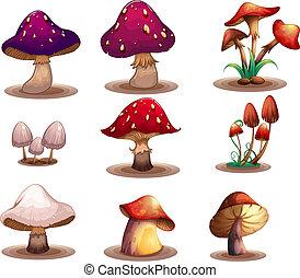 pilze, verschieden, arten