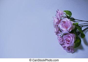 Pinke Blume auf weißem Hintergrund. Valentinstag