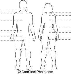 pointers., figuren., vektor, menschlicher körper, infographic, silhouetten, freigestellt, mann, grobdarstellung, frau