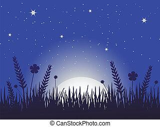 Poppy Meadow in der Nacht