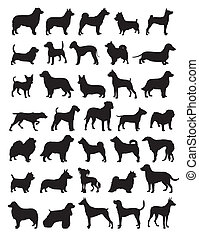 populär, silhouetten, hund, rassen