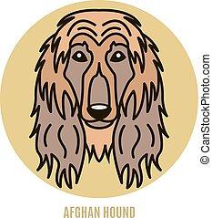 porträt, afghane