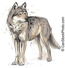porträt, hand, aquarell, wolf, gezeichnet, spritzen