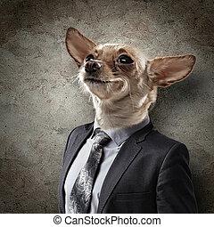 porträt, lustiges, hund, klage