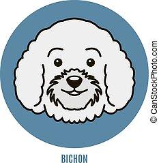 portrait- abbildung, bichon., vektor