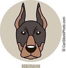 portrait- abbildung, vektor, dobermann.