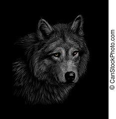 Portrait eines Wolfskopfes auf einem schwarzen Hintergrund