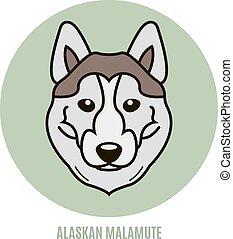 Portrait of alaskan malamute