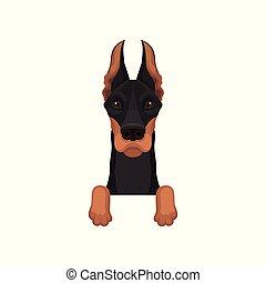 Portrait von Dobermann mit Pfoten. Der Hund hängt an der Grenze. Heimtier mit schwarzem Mantel und langen spitzen Ohren. Flat Vektordesign