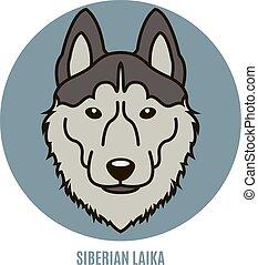 Portrait von siberianischem Laika