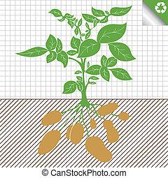 Potato Pflanzen Busch-Konzept.