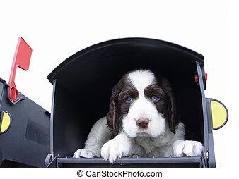 Puppy in der Post