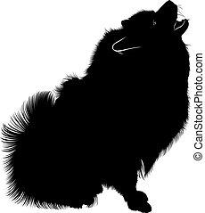 purebred, wolfspitz)., silhouette, hund, (german, schwarz, keeshond, porträt, spitz, mann, spitz.