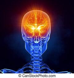 Röntgen-Hirn- medizinischer Scan-Frontaussicht