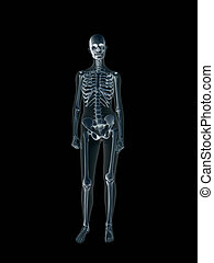 röntgenaufnahme, body., xray, weibliche , menschliche