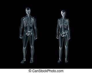 röntgenaufnahme, koerper, xray, mann, woman., menschliche