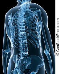 Röntgenbilder zurück
