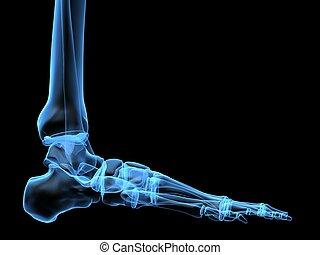 Röntgenfuß
