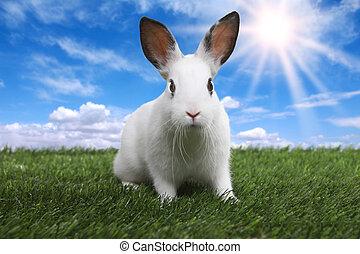 Rabbit auf serene sonnigem Feld im Frühling