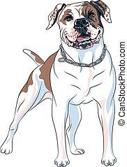 rasse, amerikanische , skizze, bulldogge, hund, vektor