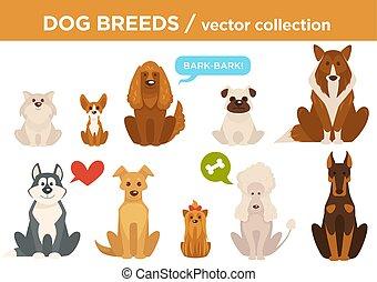 rassen, vektor, tiere, karikatur, hund