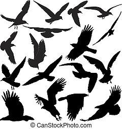 Raven Hawk Eagle gullt Krähen