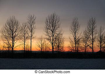 Reihe von nackten Bäumen gegen den Wintersonnenuntergang.