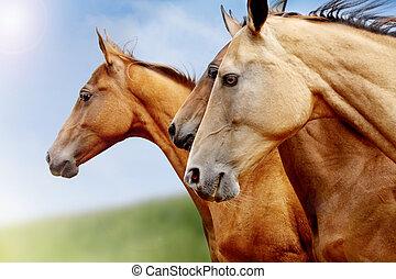 Reinrassige Pferde schließen