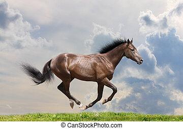 Reinrassiges Pferd
