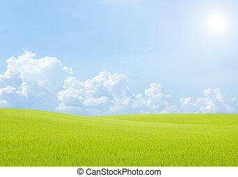 Reisfeld Grünes Gras blauer Himmel Wolkenlandschaft Hintergrund.