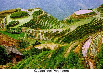 Reisterrassen in der Montage von Yunnan, Porzellan.