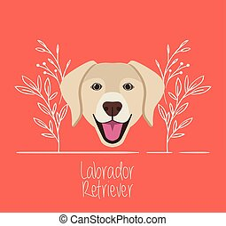 reizend, kopf, labrador, haustier, zeichen, hund, apportierhund