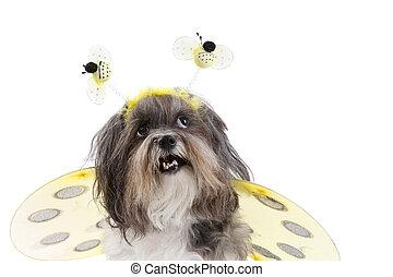 reizend, mögen, angekleidet hund, biene