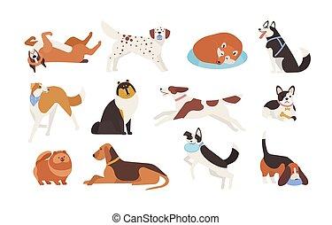 reizend, satz, liegen, style., lustiges, haustier, freigestellt, hintergrund., verschieden, amüsant, weißes, hunden, wohnung, bunte, spielende , abbildung, sammlung, karikatur, tiere, sitting., eingeschlafen, vektor, rassen