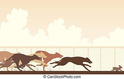 rennen, windhund, hund