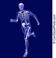 rennender , röntgenaufnahme, mann