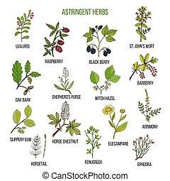 Riesige Kräuter. Hand gezeichnete Arzneipflanzen
